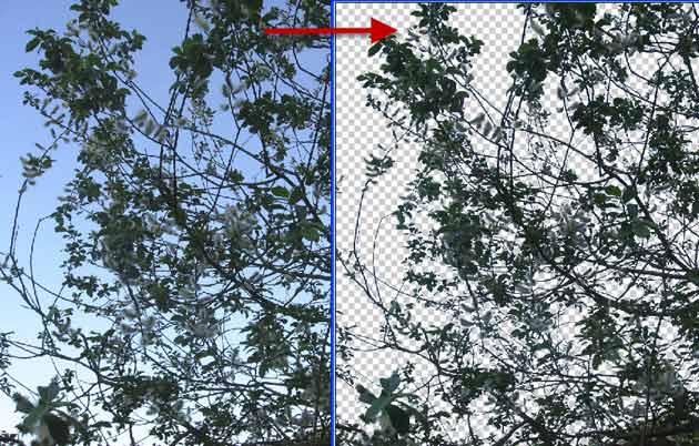 Дерево после обработки фотографии в фотошопе