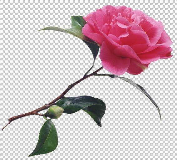 Фон розы белые для фотошопа